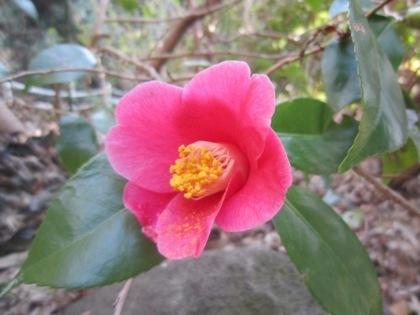 平等寺に咲く花