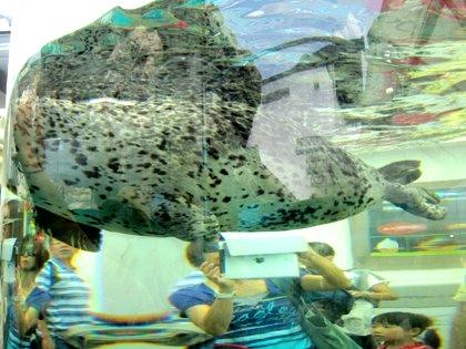 京都水族館のゴマフアザラシ