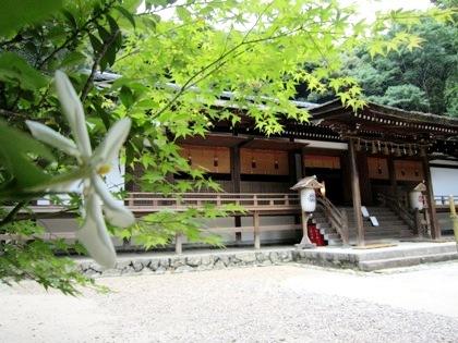 拝殿とクチナシの花 くちなし 梔子