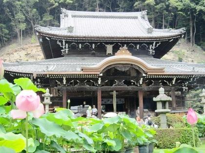三室戸寺本堂とハス 蓮の花