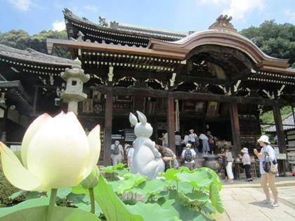 三室戸寺の兎