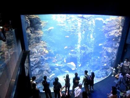 大水槽 京都水族館