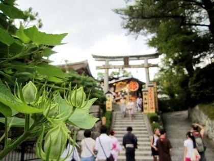 芙蓉と地主神社