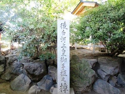 後白河上皇お手植えの大樟 新熊野神社