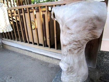 大樟さんの「さすり木」 新熊野神社