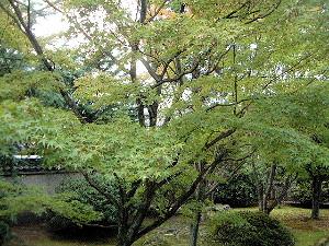 kyoto88.jpg