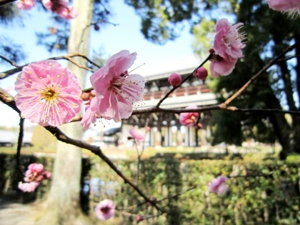 東福寺三門と梅